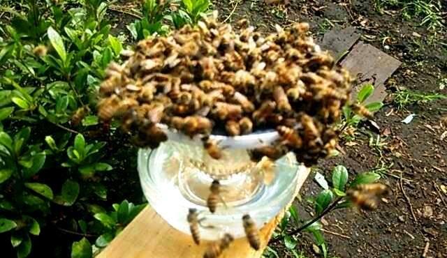 溢れんばかりの蜂