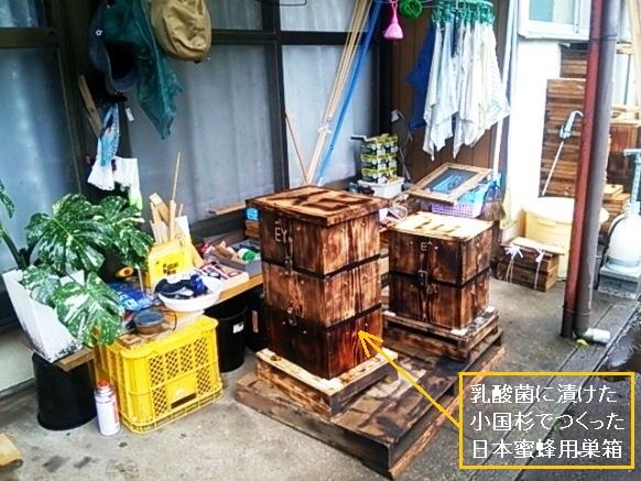小国杉の巣箱