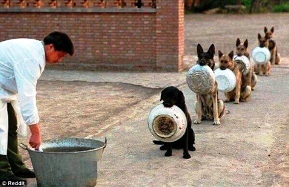 中国の警察犬