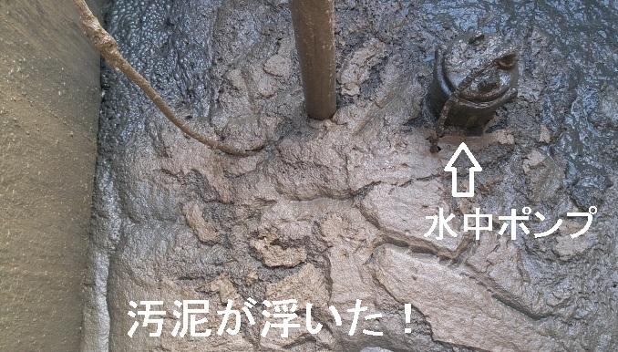 浮上した粉砕汚泥2