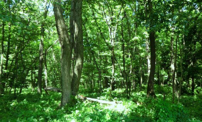 森はホットパーティクルの吸着剤